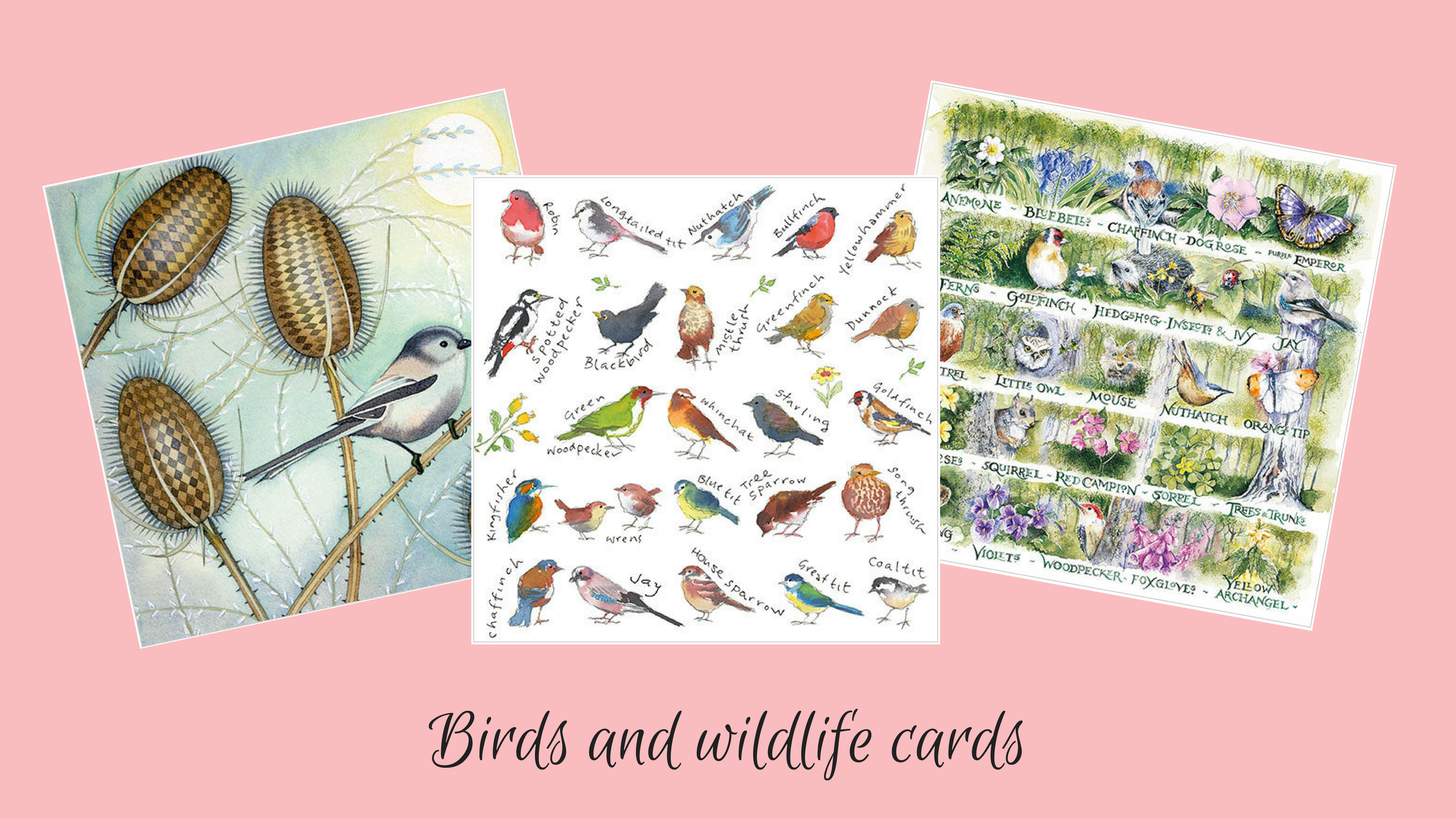 New Phoenix cards wildlife and birds